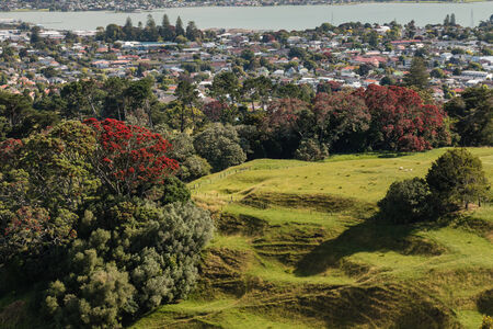 urban sprawl: parkland above Auckland suburb