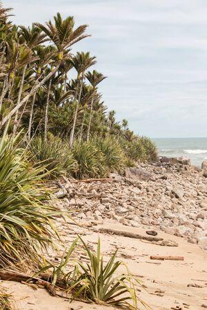 unspoilt: Nikau palms growing on New Zealand coast Stock Photo