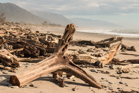 unspoilt: driftwood on West Coast beach in South Island, New Zealand Stock Photo