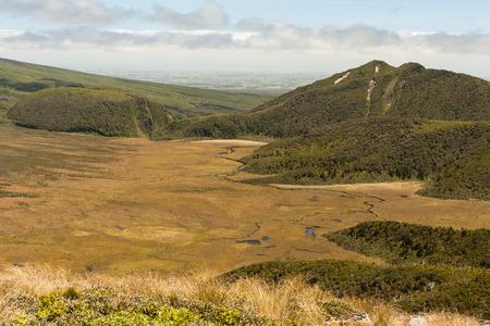 egmont: Ahukawakawa swamp in Egmont National Park Stock Photo