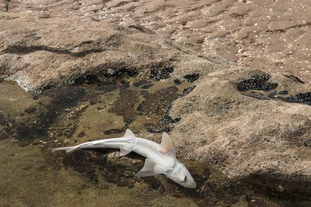 carcasse: carcasse de requins se trouvant sur la plage