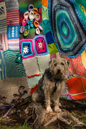dog waiting: dog waiting in front  of tree covered in yarn bombing
