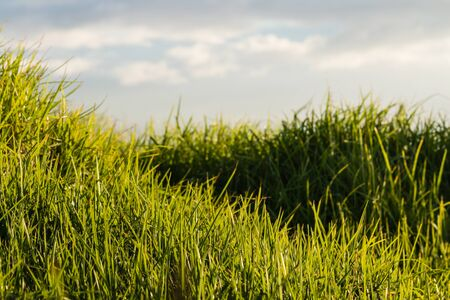blades: close up of grass blades