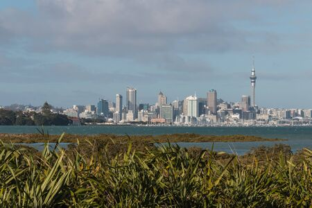 new zealand flax: mangrove swamps with  Auckland skyline in background