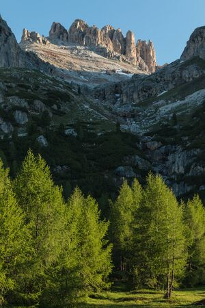 craggy: european larch trees in Dolomites