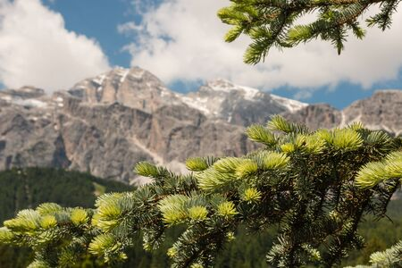 needle tip: closeup of spruce needles with mountains in background Stock Photo