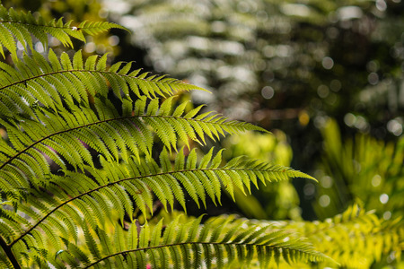 fronds: closeup of fresh fern fronds Stock Photo