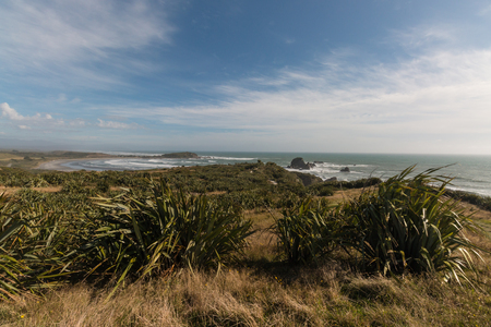 new zealand flax: New Zealand flax growing on West Coast Stock Photo