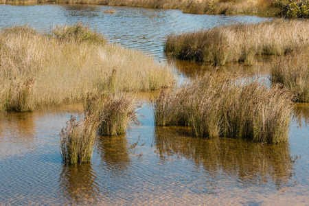 marshes: tussock growing in marshes Stock Photo