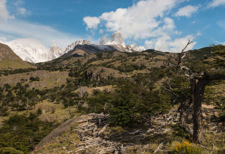 cerro chalten: withered trees in Los Glaciares National Park