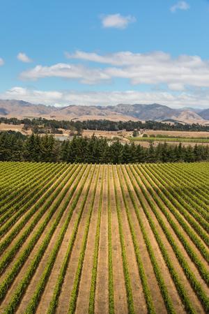 marlborough: aerial view of vineyard in Marlborough, New Zealand
