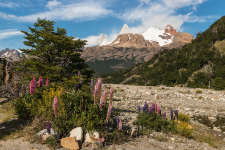 los glaciares: lupin flowers in Los Glaciares National Park