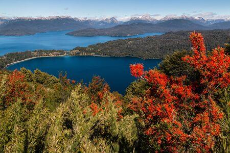 lake nahuel huapi: Chilean firebush flowers above Nahuel Huapi Lake