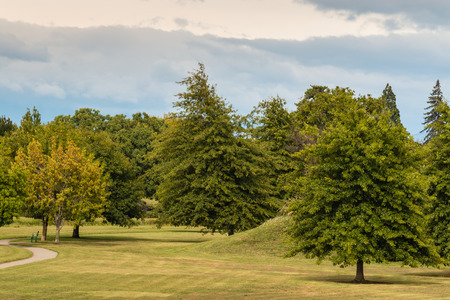 hojas de arbol: zonas verdes con �rboles de roble en oto�o temprano