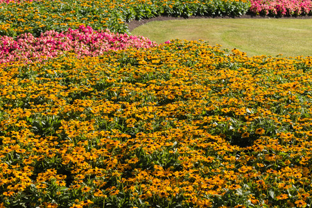 coneflowers: yellow and pink flowers growing in garden