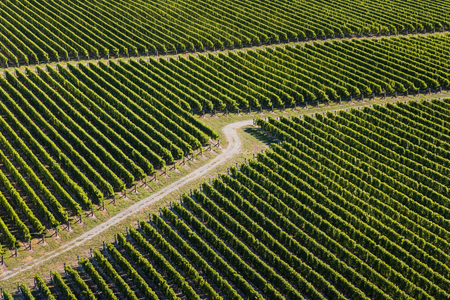 marlborough: aerial view of vineyards in Marlborough, New  Zealand Stock Photo