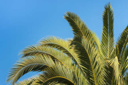 fronds: closeup of palm tree fronds Stock Photo