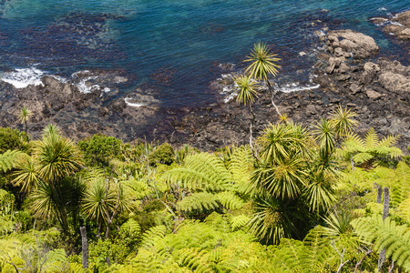 silver fern: silver ferns and cabbage trees  growing on New Zealand coastline Stock Photo