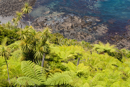 silver fern: aerial view of New Zealand rainforest