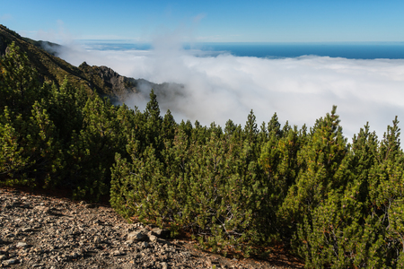 inversion: pine forest with cloud inversion Stock Photo