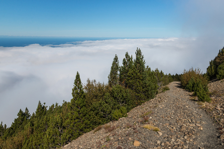 inversion: pine tree forest with cloud inversion