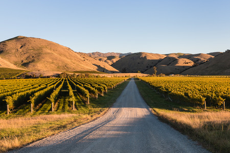wither: vineyards in Wither Hills, New Zealand Stock Photo