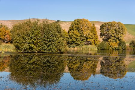 common reed: trees reflecting on lake surface in autumn Stock Photo