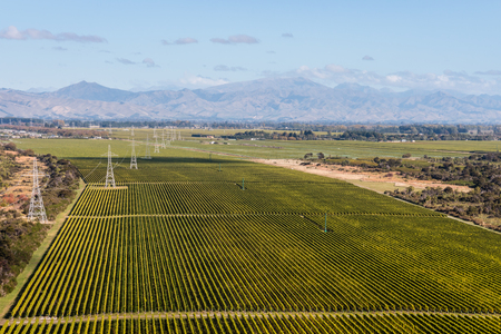 vineyard plain: vineyards in Marlborough, New Zealand