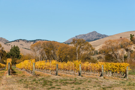 vineyard plain: vineyard in autumn with hills and sky