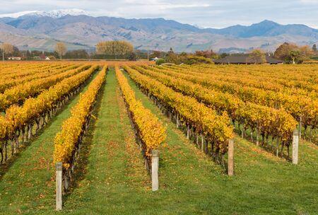 marlborough: Marlborough vineyards in autumn Stock Photo
