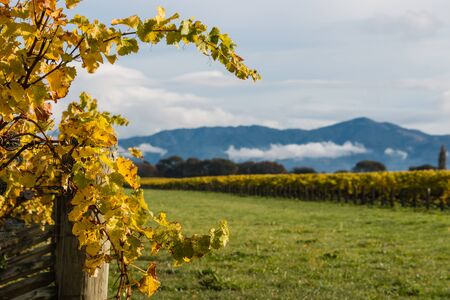 copy space: autumn vineyard with copy space Stock Photo