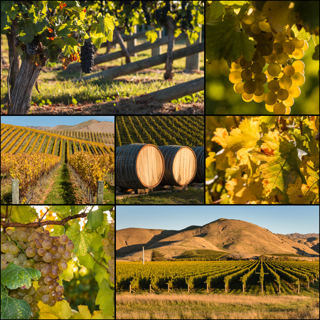 sauvignon blanc: collage of New Zealand vineyards in autumn Stock Photo