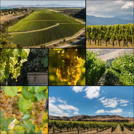 sauvignon blanc: New Zealand vineyards collage Stock Photo