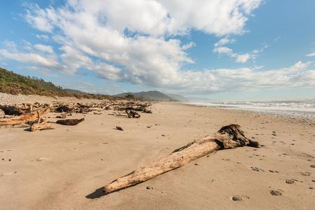 west  coast: driftwood on sandy beach at West Coast, New Zealand Stock Photo