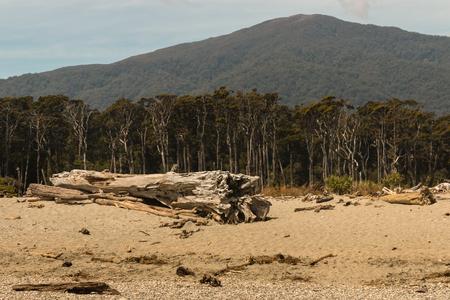 west  coast: Southern beech rainforest on West Coast of New Zealand