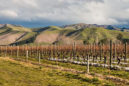 marlborough: vineyard in New Zealand in winter