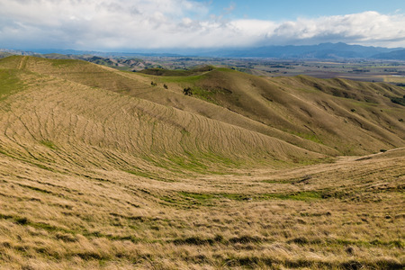 wither: grasslands at Wither Hills in New Zealand Stock Photo