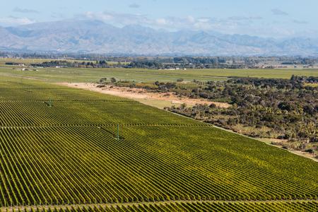 marlborough: aerial view of rows of grapevine in Marlborough region, New Zealand Stock Photo