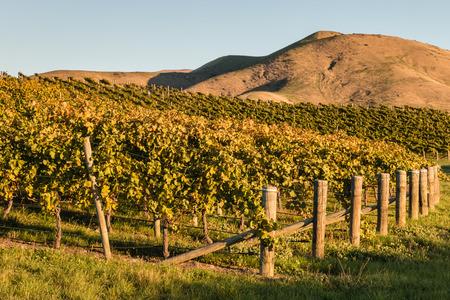 marlborough: sunset over New Zealand vineyard in autumn Stock Photo