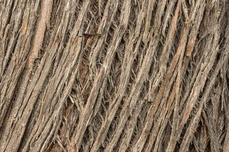 grooves: detail of old tree bark grooves
