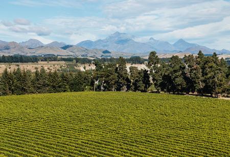 marlborough: aerial view of vineyard in Marlborough region in New Zealand Stock Photo
