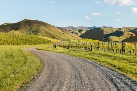 marlborough: vineyards in Marlborough, New Zealand in springtime