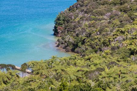 marlborough: silver fern forest on New Zealand coastline