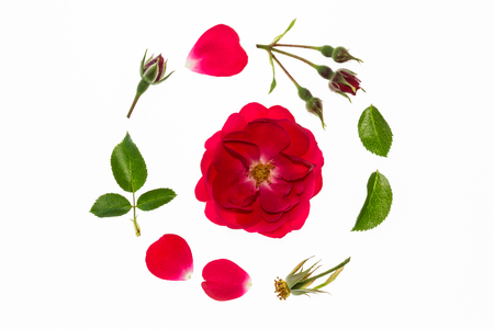 iluminado a contraluz: red rose flowerhead, petals and leaves arranged in circle on white background
