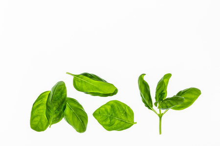 iluminado a contraluz: sweet basil leaves on white background with copy space