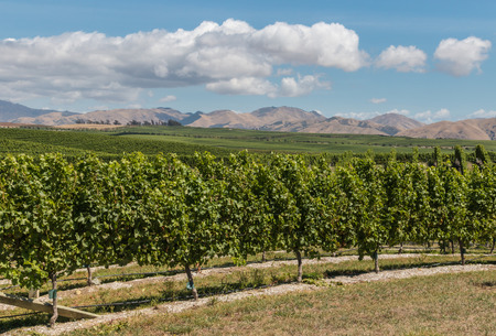 marlborough: New Zealand vineyards countryside