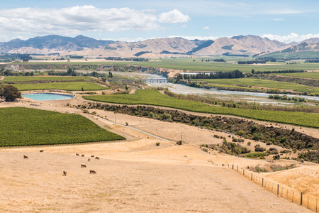 marlborough: aerial view of vineyards in Awatere valley in New Zealand