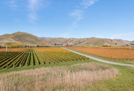 marlborough: aerial view of New Zealand vineyards in autumn