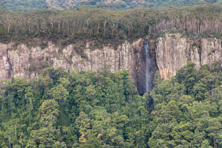 Gondwana rainforest with waterfall at Springbrook National Park, Queensland, Australia