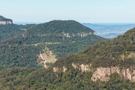 ゴンドワナ雨林のラミントン国立公園、クイーンズランド州、オーストラリア